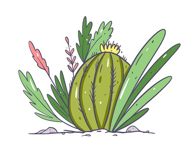 Cactus and plant
