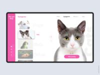 Pet shop design concept