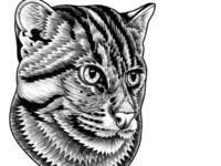 Fishing Cat illustration