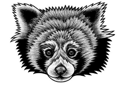 Red Panda Dribble
