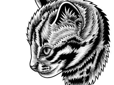 Leopard cat kitten - ink illustration