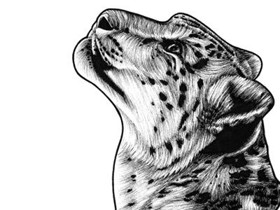 Snow Leopard - ink illustration