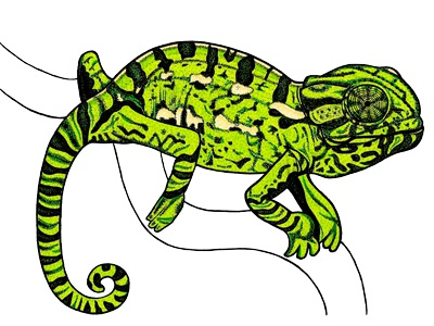 Chameleon - ink and marker illustration