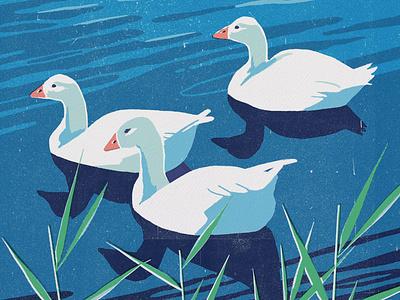 Goose reflections water nature goose screenprint digital art procreate drawing ipadpro illustration