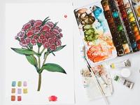 Flor Roja/ flower