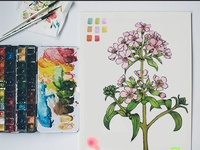 Flor Rosadan / flower