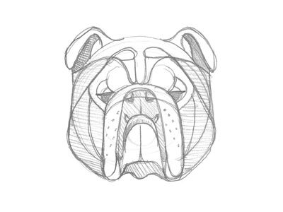 Mystery Project 70 english bulldog nathan goldman dan kuhlken pencil geometric dog bulldog sketch dkng