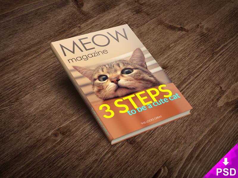 800x600 cat magazine