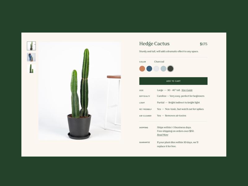 Bloomscape Detail product ecommerce website detail bloomscape plant