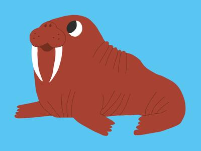 Walrus !