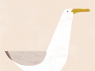 Gabian poster print seagull bird illustration