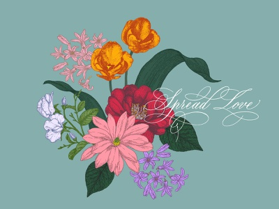 spread love with spring bouquet sweet pea hyacinth magnolia camellia drawing tulips bloom blossom calligraphy handlettering lettering script lettering script flourishing copperplate vector illustration botanical