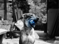 Dog with planet Earth photomontage