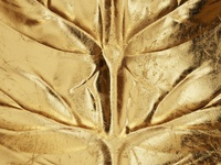 The Golden Leaf!