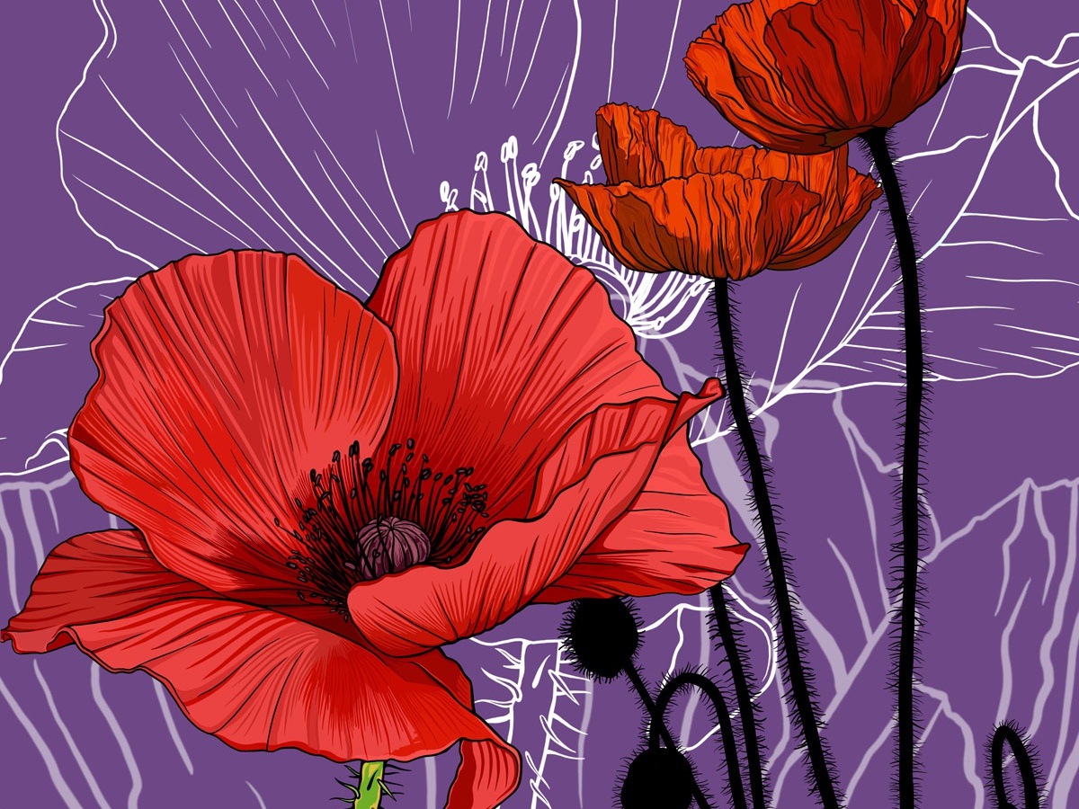 Red Poppies - Birth Month Flower for August design vector drawing illustration