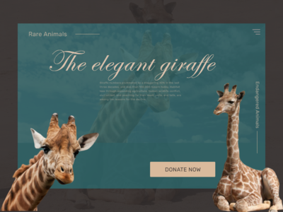 Animals, elegant giraffes donation
