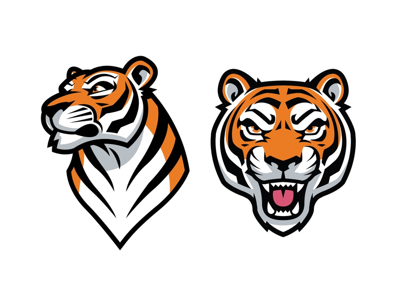 Tiger Vector Graphics by Kyle Petchock on Dribbble