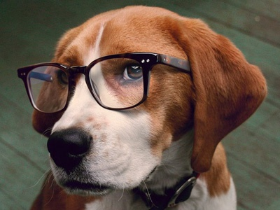 Podsy retouching photoshop dog glasses orange green beagle