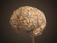 Realistic Human Brain