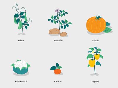 Vegetables sketch motion design motion graphics animation vector concept styleframe animation 2d illustration design illustrator