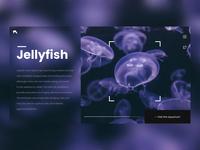 Jellyfish website night edition