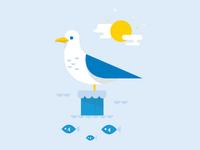 Seagull x2