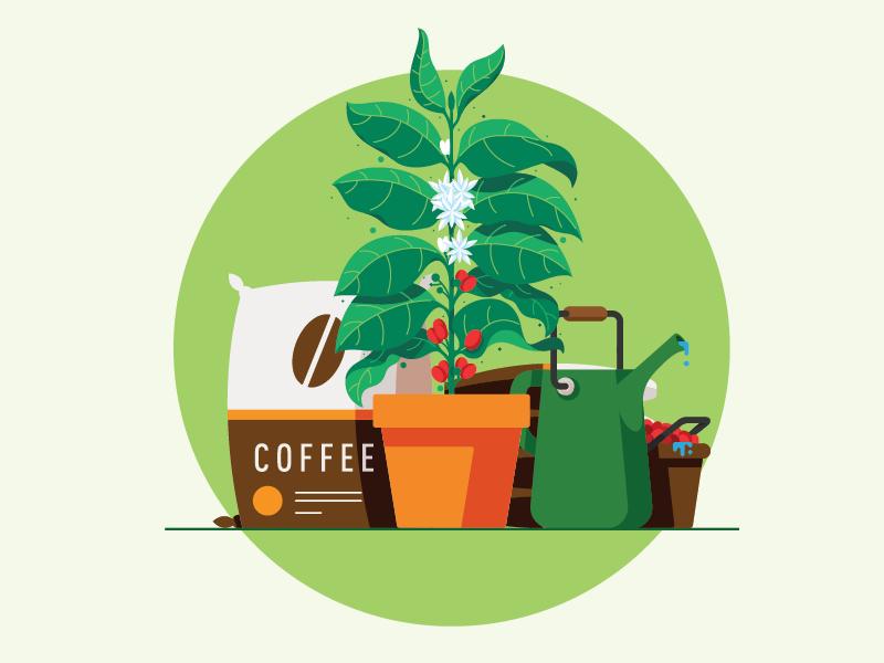 Philanthropy: Farmers agriculture planting farming sack bean plant coffee