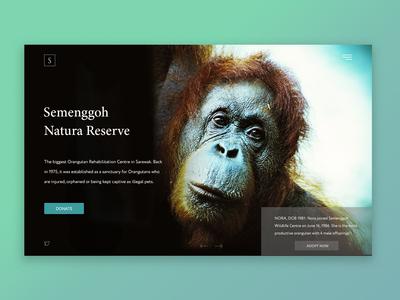 Semenggoh Natura Reserve