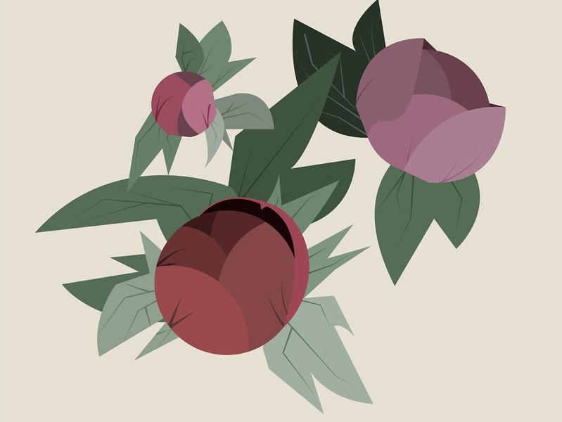 Peonies vector illustration