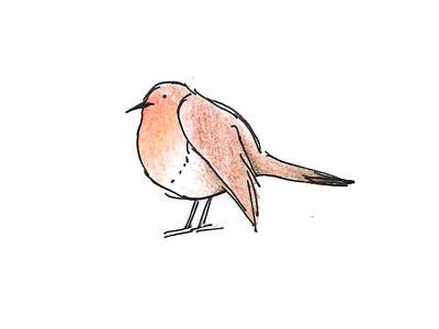 Fat robin illustration
