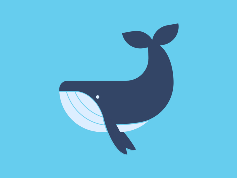 Whale blue whale whale animal cartoon vector illustration art html html css html5 css art css drawing css3 css illustration