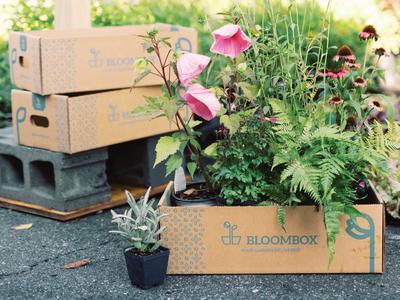BloomBox Delivery Box identity design pattern design gardening packaging design