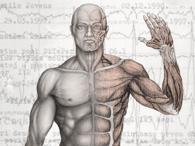 Male Human Anatomy illustration health medical anatomy