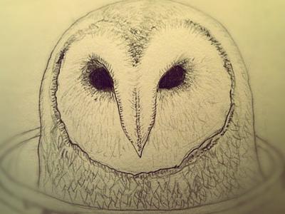 Barn owl barn owl sketch