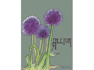 Allium Botanical Dribbble
