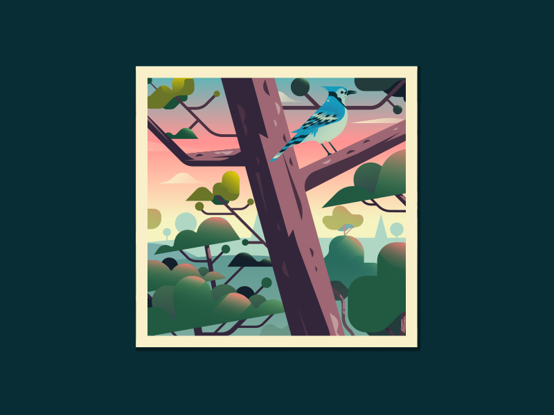 Landscape WIP birds sunset blue jay tree trees