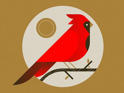 Cardinal cardinal bird illustration sun branch bird