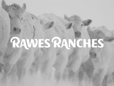 Rawes Ranches Custom Type logo bulls cattle ranch typography type custom