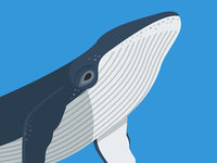 Animal cards: The Whale