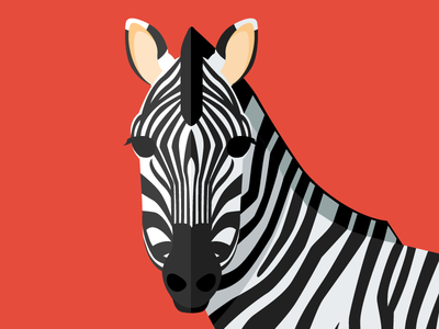 Animal cards: The Zebra savannah zebra nature flat cute illustration card animal