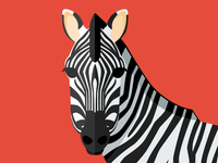 Animal cards: The Zebra