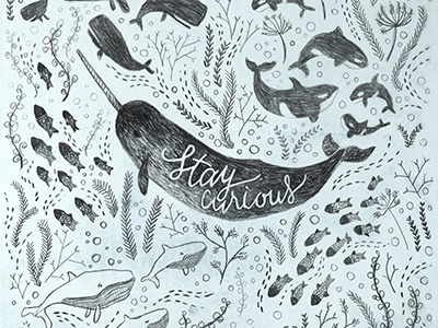 Stay Curious doodle sketch hand lettering cursive typography narwhal ocean drawing pencil pattern