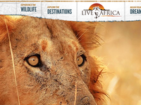 Live Africa Homepage