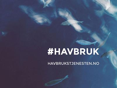 Havbrukstjenesten #havbruk havbruk design website