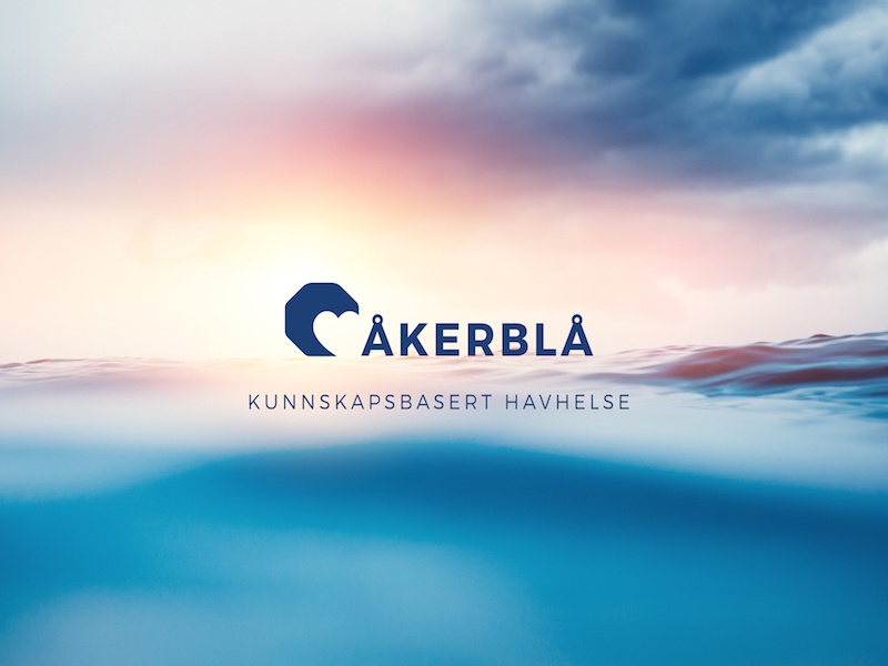 Åkerblå Brand #havbruk – Aquaculture design illustration brand concept art direction