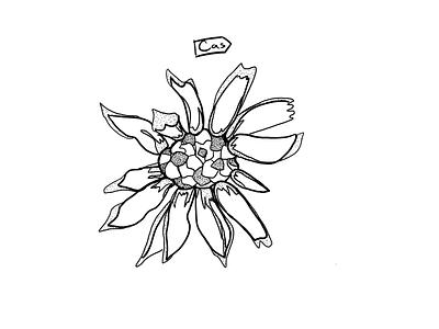 Flower Flash procreate procreate art dotwork dot digital design digital digital illustration digital art design illustration ipad pro