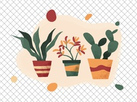 Houseplants vector illustration