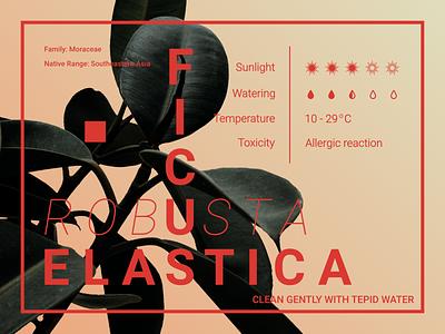 FICUS CARE digital artworks botanic botanical advert affinity designer booklet design booklet typography tips tip care beginner art artwork digitalgraphic branding design graphicdesign graphic
