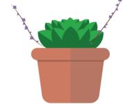 Cutie succulent
