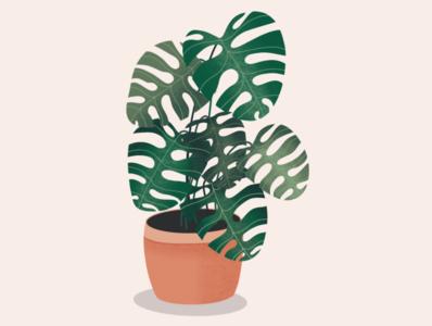 Monstera plant monstera plant procreate visual design procreateapp illustration sketch concept